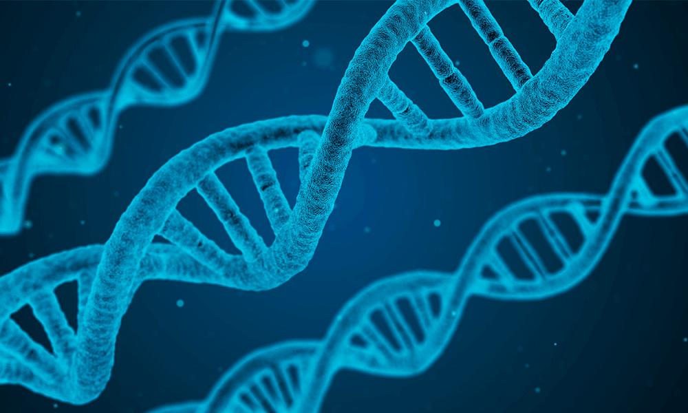 Problemas de genética