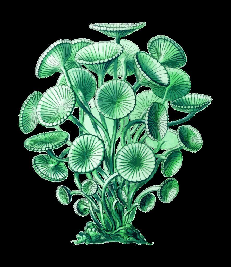 alga, algae, marine